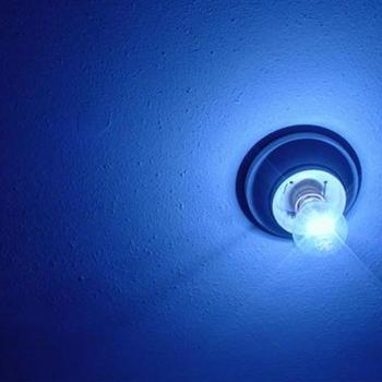 青色LEDの光に殺虫効果.JPG
