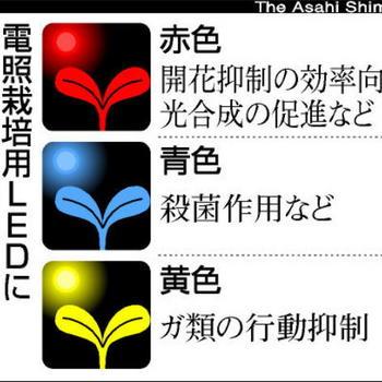 青色LEDの光に殺虫効果1.JPG